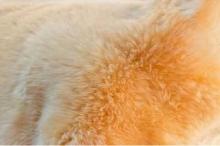 Christ medical lambskin Babysweet sheared +/- 85 cm